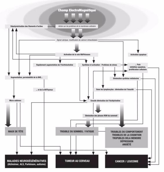 interaction des ondes électromagnétiques avec le corps humain