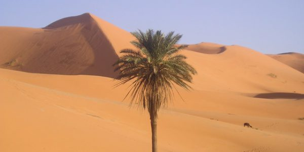 Maroc désert et Toubkal 10 – 2006